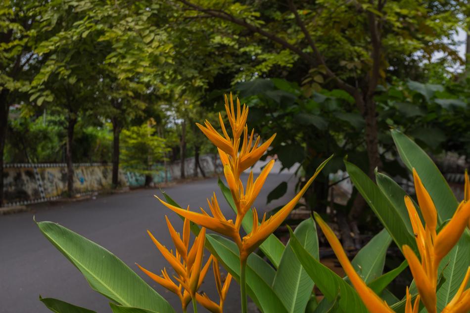 台東旅遊 - 金崙溫泉