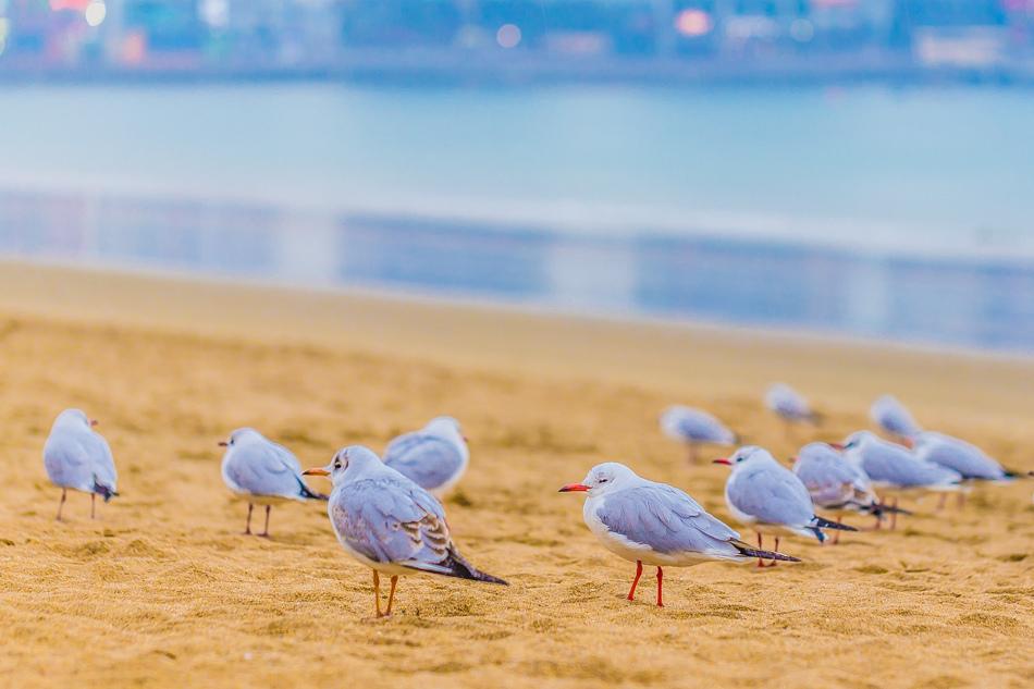 2016韓國五天四夜自由行 - 坐觀光巴士遊釜山之廣安里海水浴場