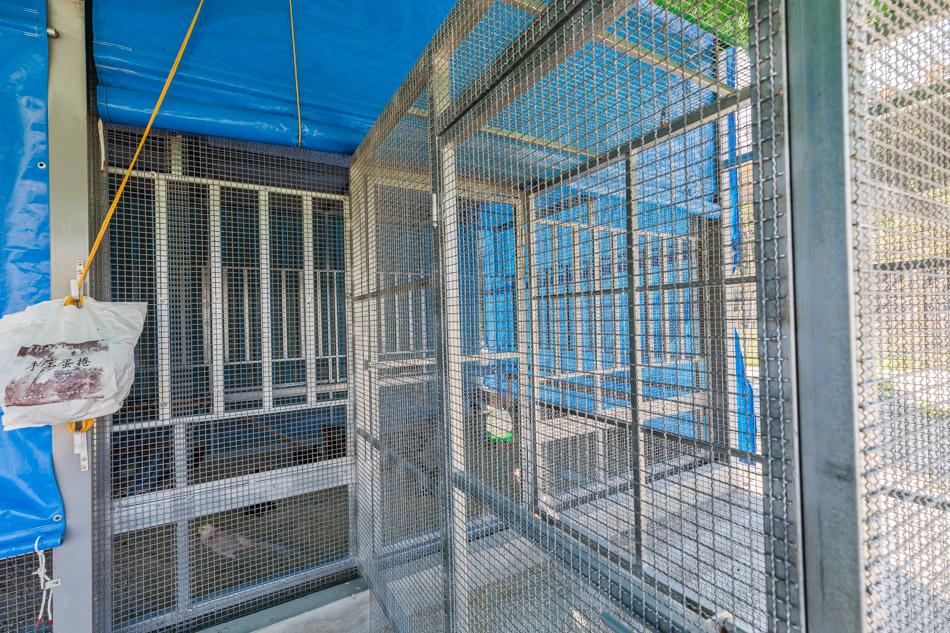 鹿兒島生態露營區175A8475.jpg