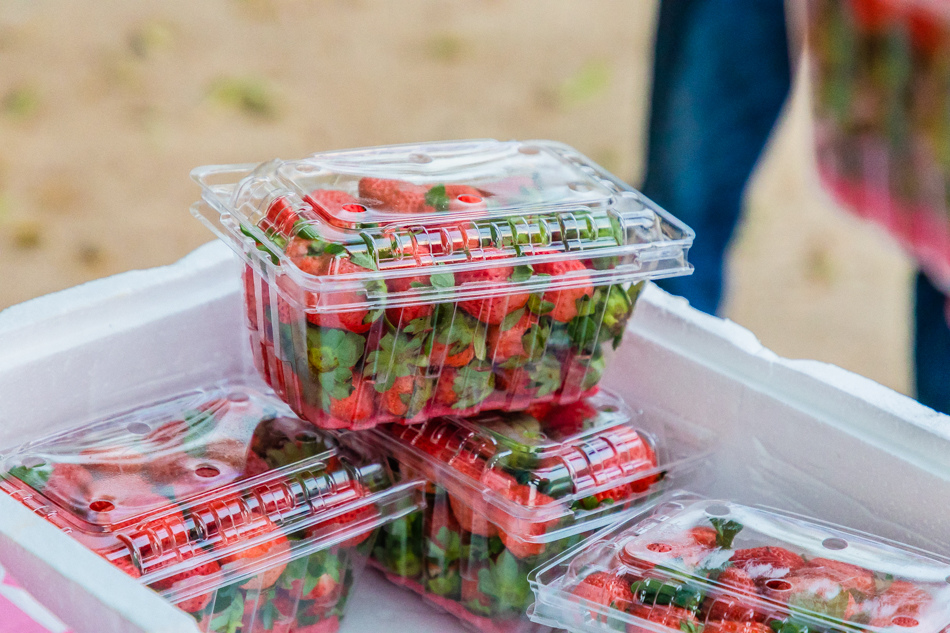 高雄旅遊 - 六龜荖濃草莓園