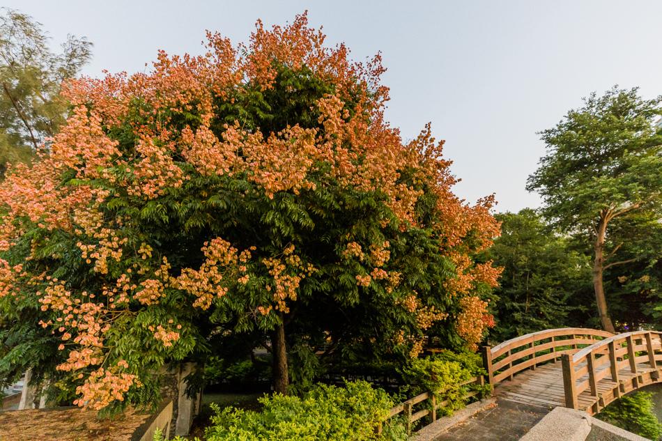 楠梓碉堡公園