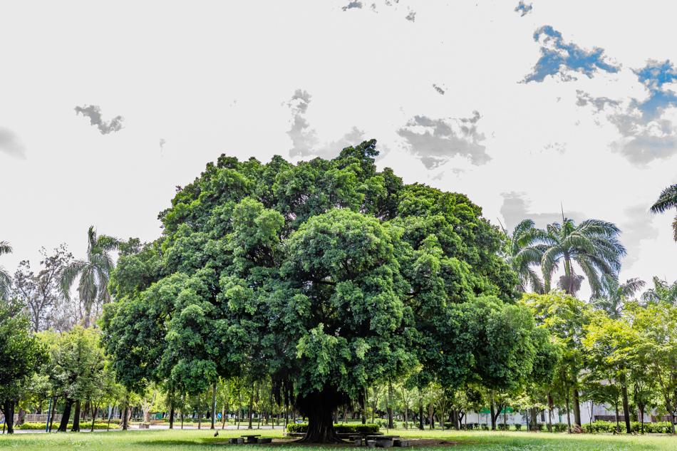屏東親子旅遊阿猴1909綠水園區