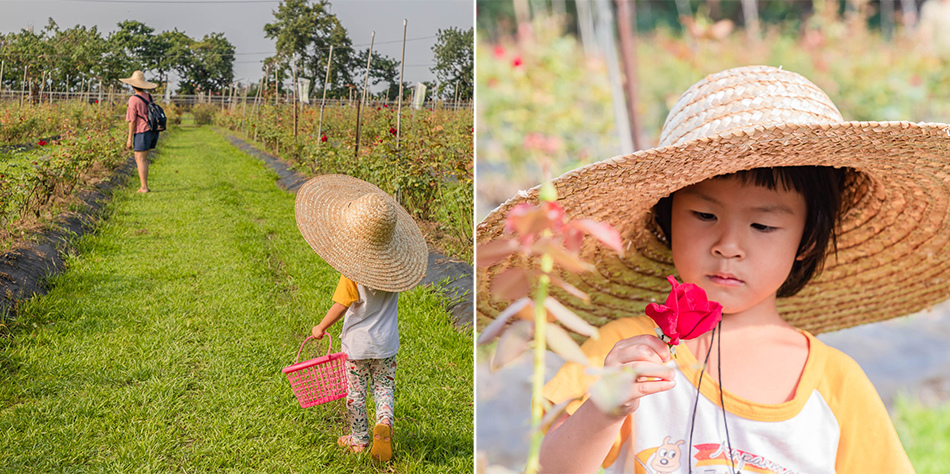 屏東旅遊 - 大花農場