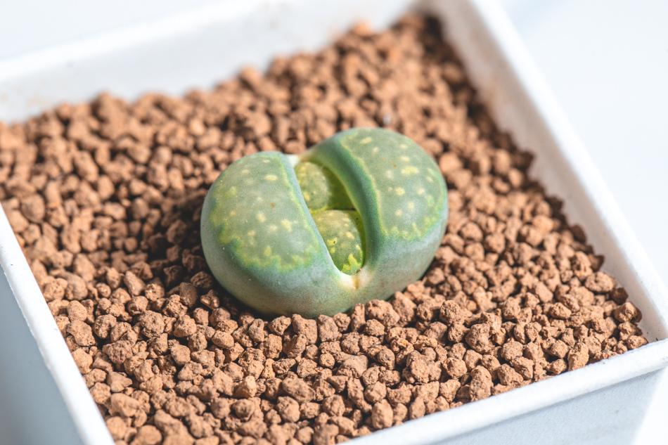 MC多肉植物補充照片
