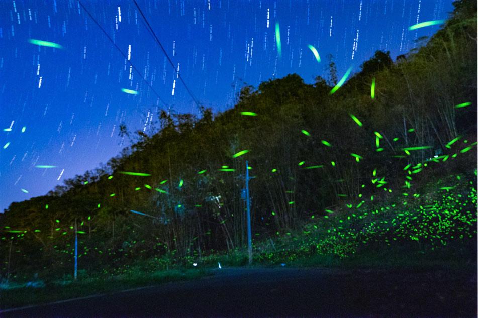 高雄旅遊 - 那瑪夏鄉 - 那次嵐露營區那瑪夏螢火蟲