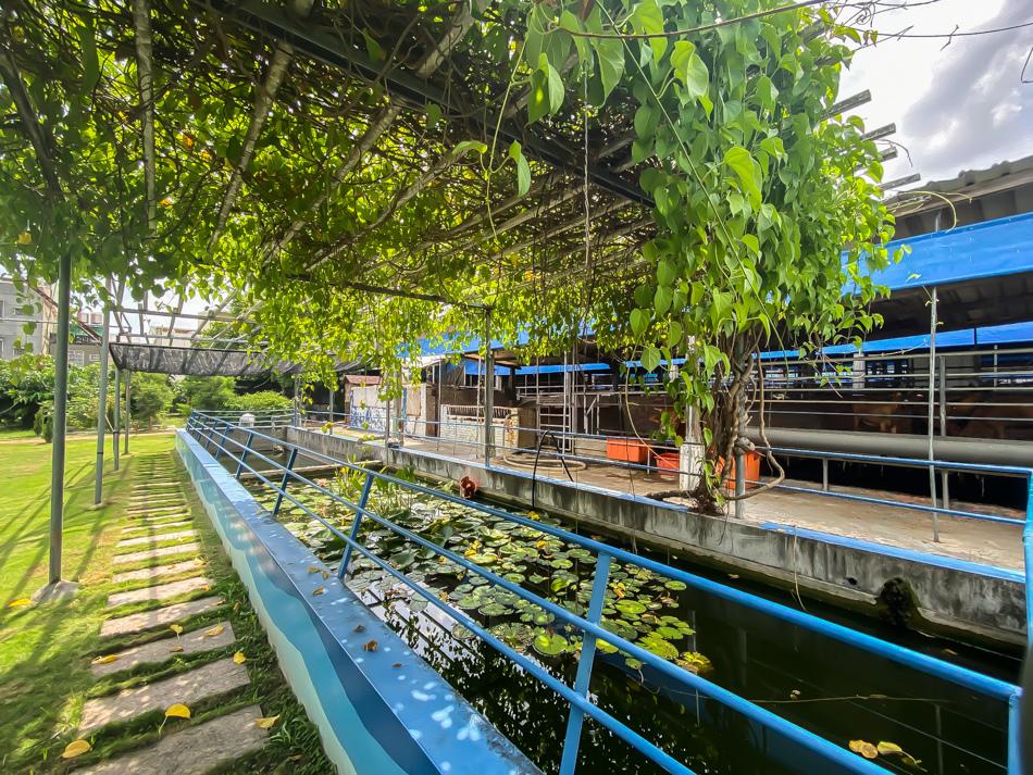 橋頭水流莊牧場