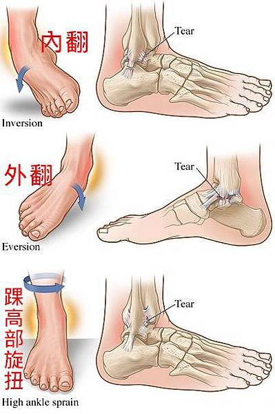 ankle s