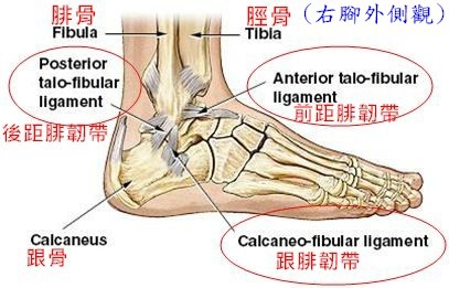 ankle a