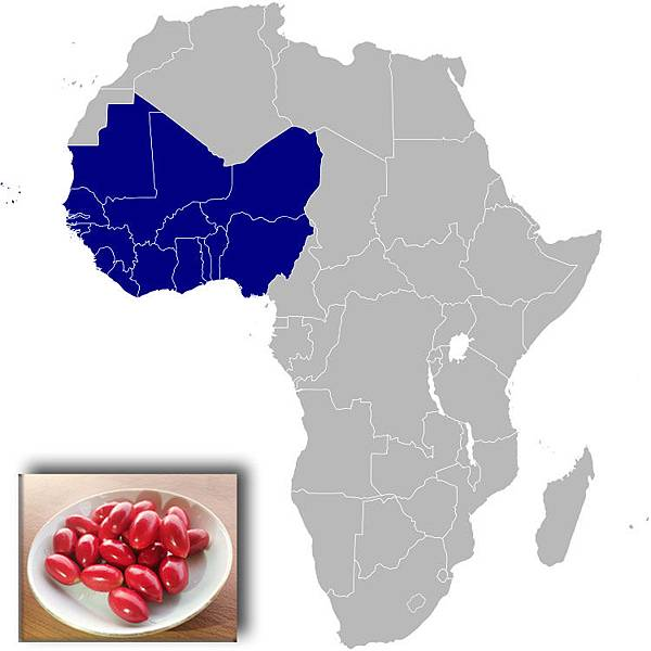 Western_Afric-miracle fruit