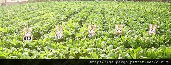 carrot04.jpg