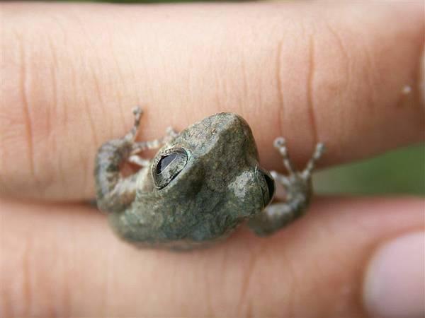 Jul.14-04山下之家青蛙樂園17呃阿.JPG