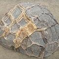 PICT1416-Fancy crack pattern with calcite vein filling of Moeraki Boulders.JPG