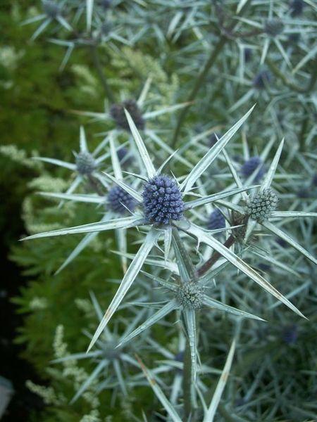 PICT1841-Flowers in Queens Park, Invercargill.JPG