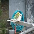 PICT1861-Strange behavior in Queens Park, Invercargill.JPG