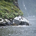 PICT1922-the 'Seal Rock' in Milford Sound.JPG