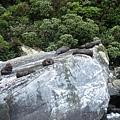 PICT1926-the NZ Fur Seals!!.JPG