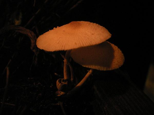 陽台小菇2