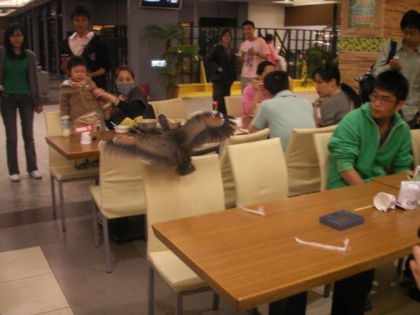 PICT0890到台大活動中心用餐區逛街的黑冠麻鷺亞成鳥~.JPG