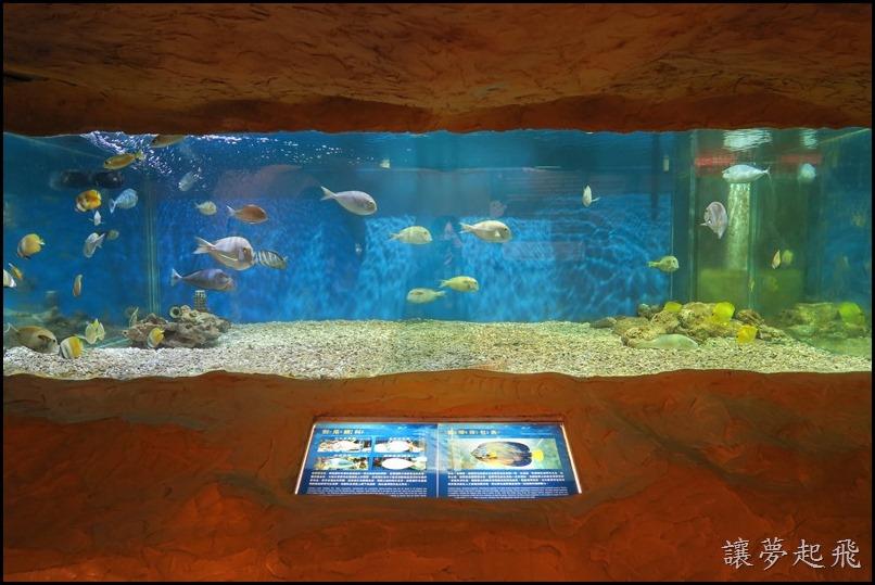 野柳海洋世界065