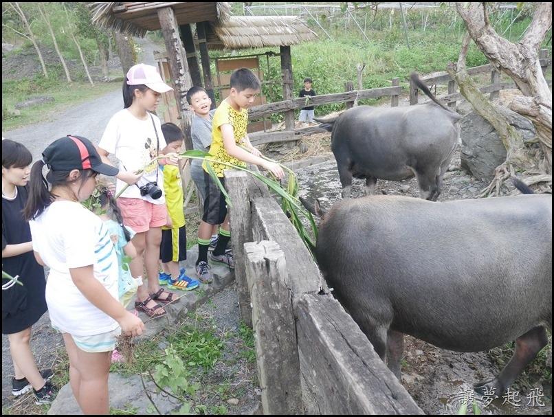 頭城農場夏令營461