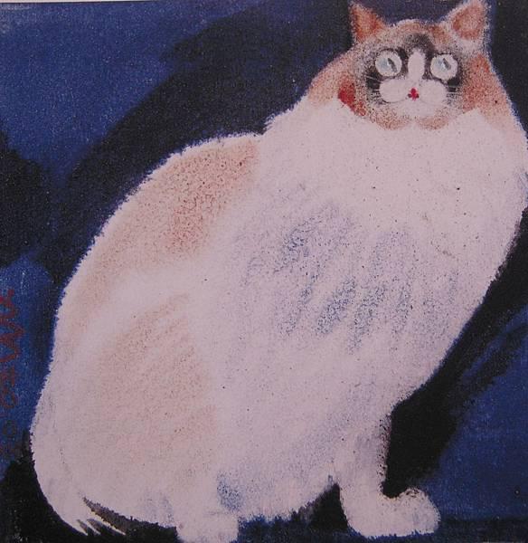 白貓2003