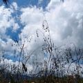 雲山水28