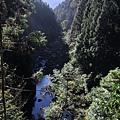 杉林溪15