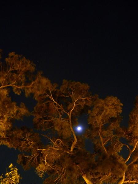 雙星拱月-2.jpg