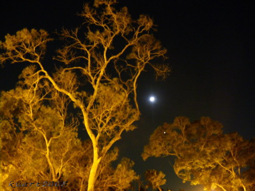 雙星拱月-5.jpg