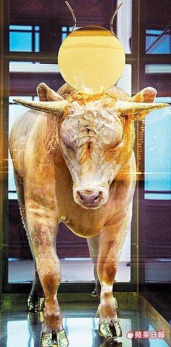 黃金小牛.jpg