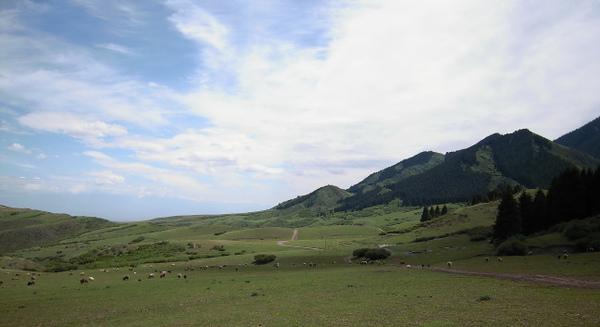 南山牧場02.jpg