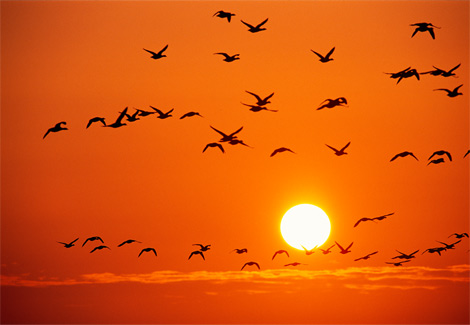 orange_birds_rosing_721120_ga_135.jpg