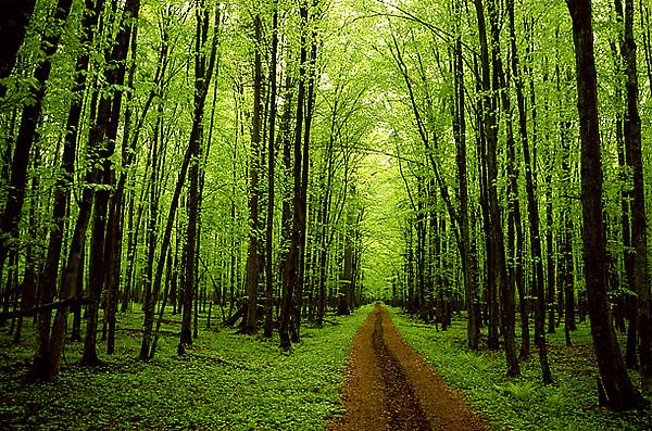 http://www.takeprideinutah.org/wp-content/uploads/2009/04/trees.jpg