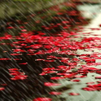 http://images.google.com.tw/imgres?imgurl=http://www.k12.com/filefolder/raining_rose_pedals.jpg&imgrefurl=http://www.k12.com/for_the_images/&usg=__c0B1B3b12t70Q5L-Jx2VGX25fEg=&h=400&w=400&sz=86&hl=zh-TW&start=73&sig2=3m5-AM5FW_UOZNLSBJo-yQ&zoom=1&tbnid=k