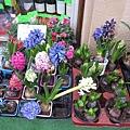 32.花店的花.jpg