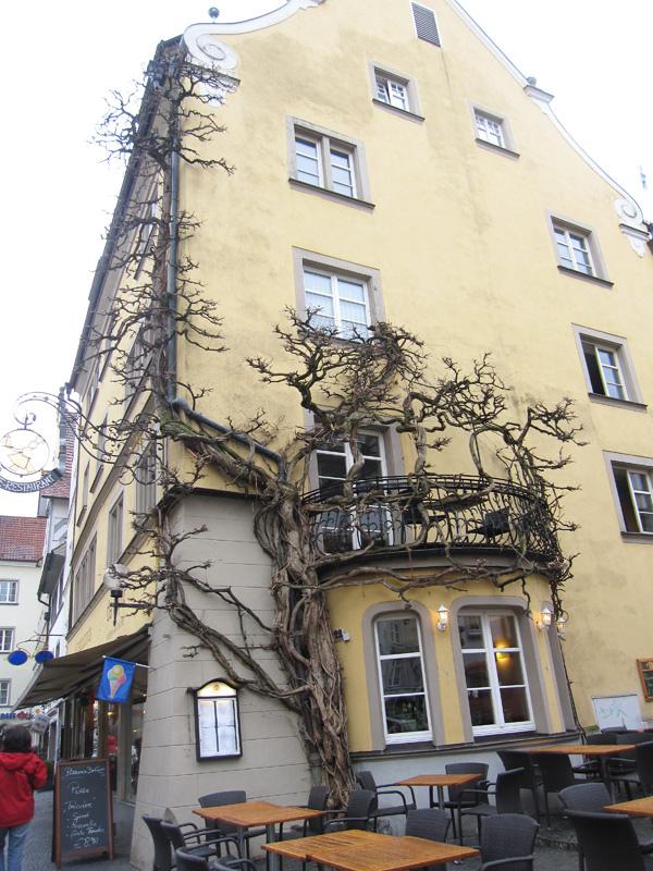 35.攀在外牆的樹.jpg