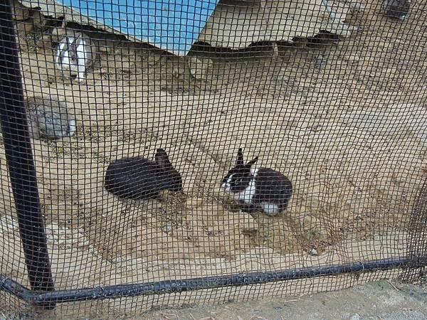 仙湖農場的小動物們_兔子.JPG