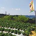 幸福莓滿草莓園03.jpg