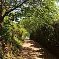 沒有櫻花的櫻花林.jpg