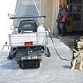 楚格峰_鏟雪摩托車和一旁的狗狗.JPG