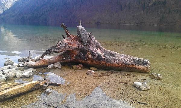 國王湖_教堂附近的漂流木.jpg