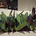 立體書展_10 Metamorphoses Butterfly.jpg