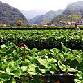 依虹草莓園_02.jpg