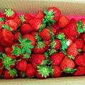 依虹草莓園_11.jpg