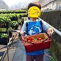 依虹草莓園_12.jpg