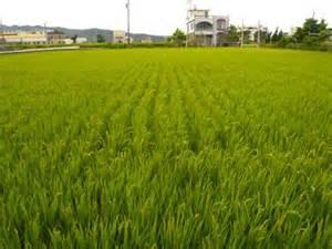 台灣的國家農業