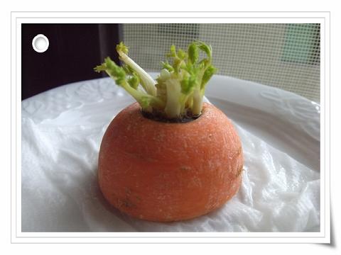 紅蘿蔔蹲完綠蘿蔔蹲.jpg