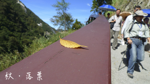 落葉.jpg