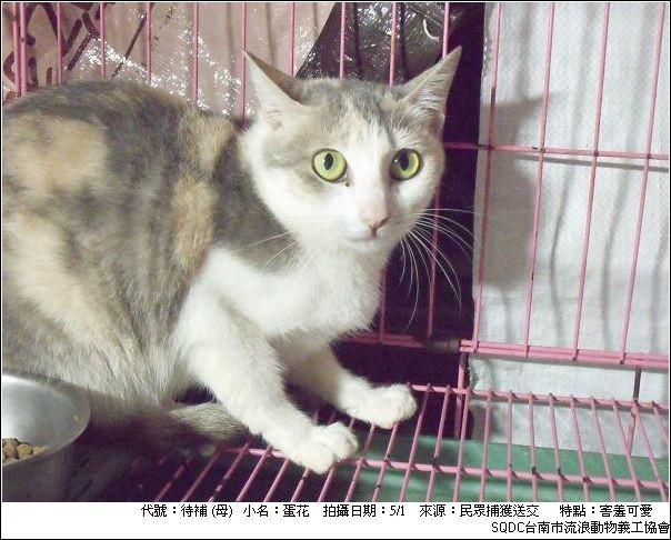 酷庫貓-蛋花