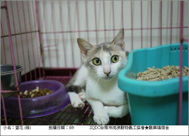 酷庫貓-蛋花2010.12.04朵貓貓之夜送養會